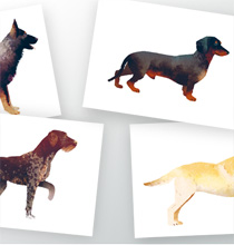 Hunde #1